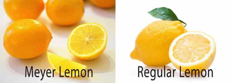 Meyer lemon vs. regular lemon